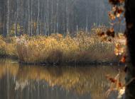 jesien12.jpg