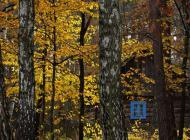 jesien14.jpg